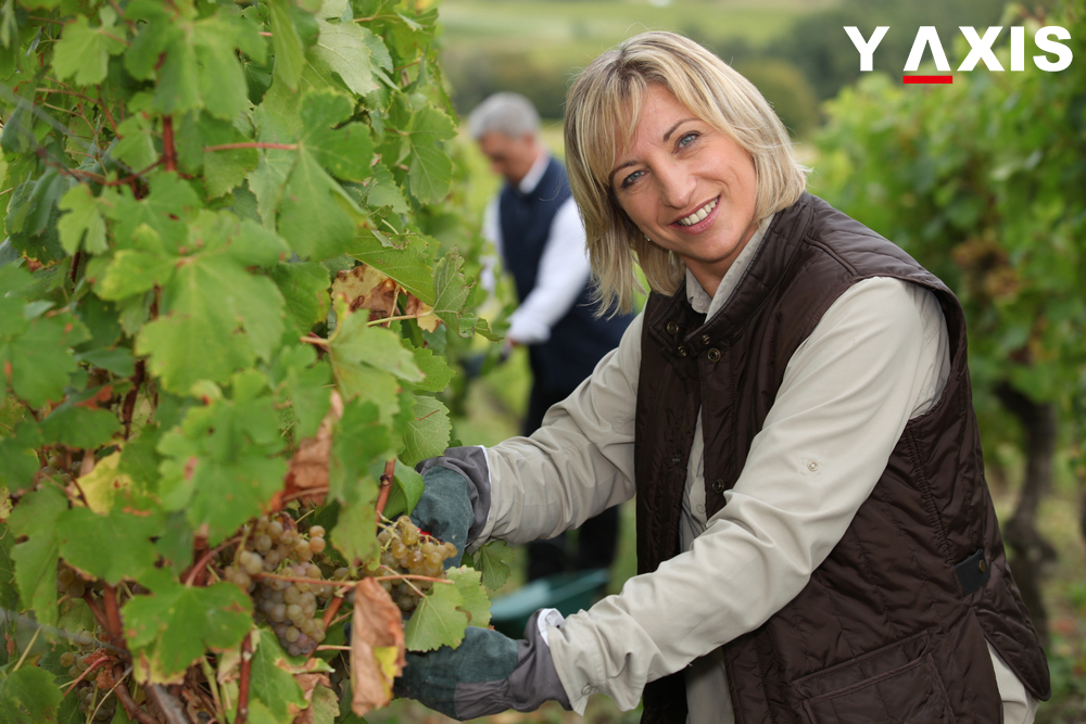 NZ Wine industry
