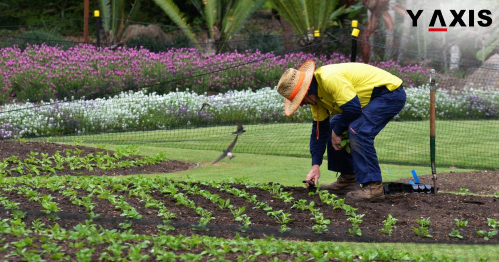Australia Farmer